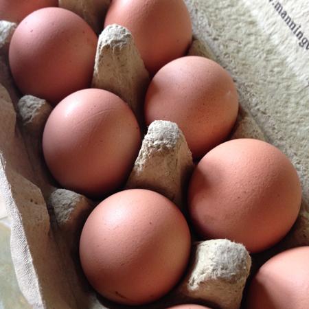 eggscarton